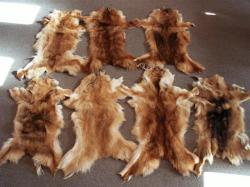 Gatti uccisi per fare pelliccie