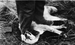 Cane ucciso per soffocamento