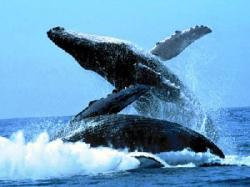 Salto Balene
