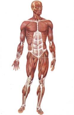 corpo umano malattia