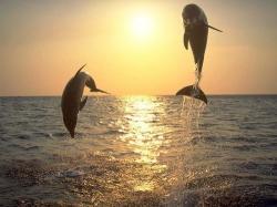 delfini natura sfruttamento uomo