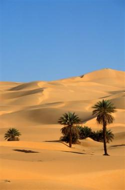 deserto agricoltura