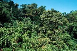 foresta_tropicale