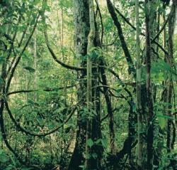 alberi foresta pluviale amazzonica