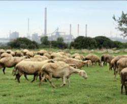 pascolo inquinamento divieto taranto