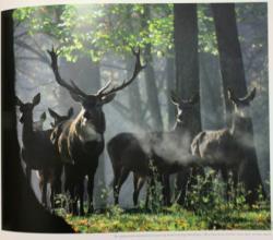 Climatici che possono minacciare la foresta sono ormai evidenti