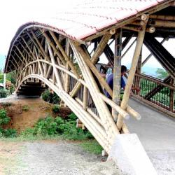ponte_bamboo