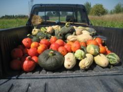 raccolta autoproduzione ortaggi frutta