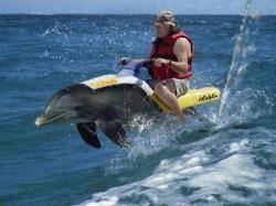 sfruttamento uomo delfino