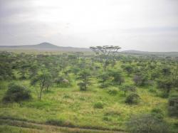 tanzania vegetazione foresta